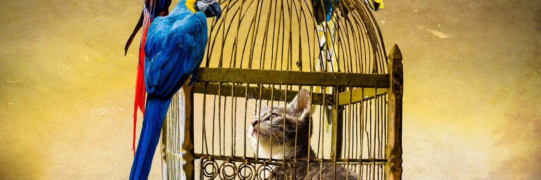 Cica ketrecben, körülötte papagájok